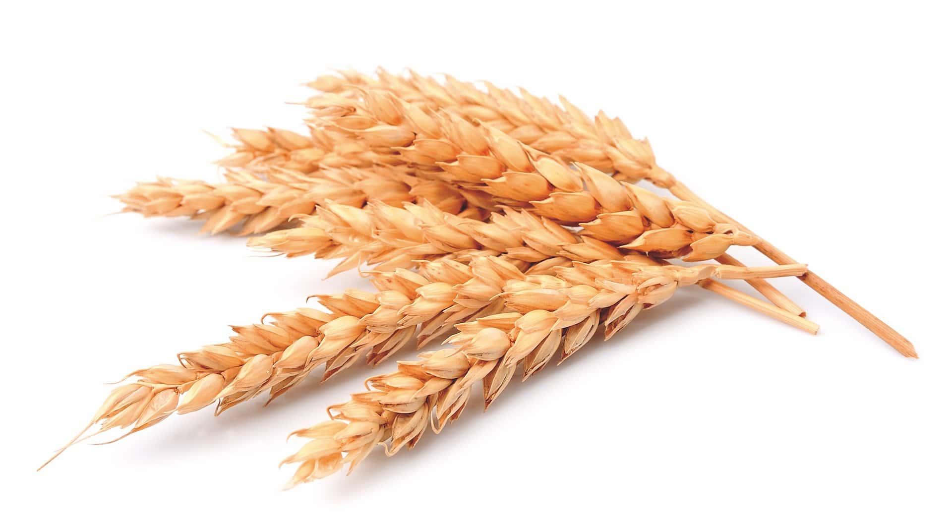 Epi-cereales